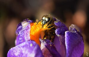 Bienen Fruehstueck