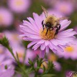 Bienen und Nektar