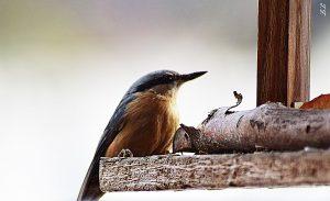 seltener Vogel