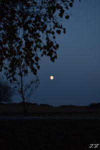 Mondbild im Westerwald