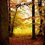 Herbststimmug