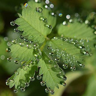 Wassertropfen im Sonnenlicht finde ich total magisch!!😍😍 Habt ein schönes Wochenende 🍀🍀 #wassertropfen #drops #drop #magic #magisch #sonnenschein #sun #macrophotography #mengerskirchen #nature #natur #natura #outdoor #outside #macro #pic #macro_mood #instagood #insta #macroshot #mypic #nice #schön #garten #garden#nikon