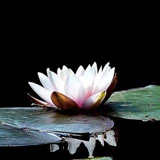 Seerose Nr.2 #nikon #searose #seerose #water #see #teleobjektiv #niceplace #niceday #schönertag #outdoor #outside #perfektertag #freundschaft #freundin #spaziergang #sea #magic #magisch #weilburg_de #insta #instagramers #instagood#instagram