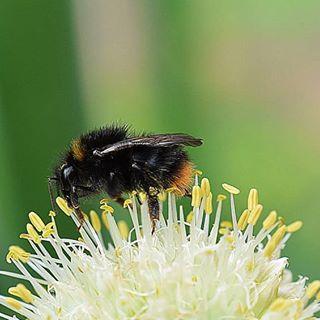 Im  Garten tummeln sich wirklich viele Tierchen  #insects #insekt #naturephotography #naturbild #natur #outdoor #garden #garten #mygarden #macrophotography #macro #macro_freaks #nahaufnahme #macro_delight #macroshot
