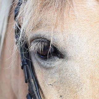 Ich finde Pferdeaugen haben eine magische Ausstrahlung! Was meint ihr? #pferd #pferde #horse #horses #reiten #auge #magisch #magic #outdoor #outside #training #theraphy #therapie #niceday #animals #animal #kaltblut #therapiepferd #free #freiheit #nature #natur #insta #instapic #instagood #pferdefotografie #horsephotography #besthorse #altenkirchen