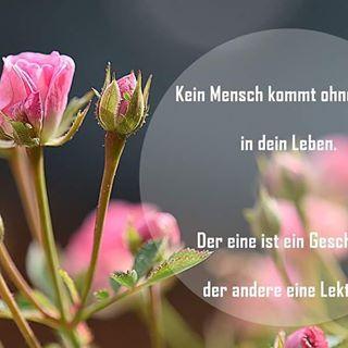 Kein Mensch kommt ohne einen Grund in Dein Leben. Der eine ist ein Geschenk, der andere eine Lektion! #menschen #test #lektion #people #magic #rose #roses #minirose #rosa #pink #garden #garten #flowers #macroshot #macrophotography #macro #mengerskirchen #nahaufnahme #nah #nikon #bild #insta #instaflower #instagrammers #whatsapp #macro_drama