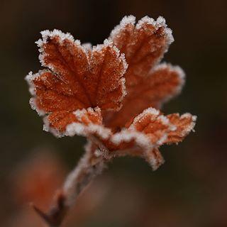 Zarter Frost auf Blättern...... #frozen #frost #winter #garden #wintertime #leaves #blätter #macroshot #macro_delight #nahaufnahme #macro #naturbild #nah #nikon #macrofotografia #outside #outdoors #cold #insta #kalt #instago #instagram #meineleidenschaft #instamacro