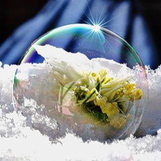 Seifenblase mal anders.....😍🍀🍀 #seifenblasen #soapballs #nice #macrofotografia #macro #nikon #nahaufnahme #naturbild #schnee #snow #draußen #outdoor #wunderbar #atemlos #christrose #winter #wintertime #insta #instanature #instago #schön #great #sunshine #sonnenschein #achtsamkeit