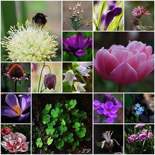 Freude an den kleinen Dingen im Leben 🙏🍀 #enjoy #freude #vonherzen #fromheart #macrofotografia #nahaufnahme #macro #flower #blume #blumen #garten #garden #mylife #meinleben #outdoor #outside #joy #insta #instago #naturbild #nature #natur #life #fun #instagram #nice #macro_delight #macrophoto