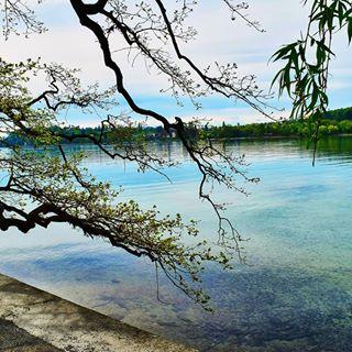 Ein wunderbarer Ausblick auf den Bodensee 💜💙❤🍀 #mainau #insel #bodensee #inselmainau #niceday #walk #outdoor #sea #perfekt #instatree #insta #fever_trees #fever_natura #naturbild #nature #instagood #niceone #naturephotography #naturfotografie #nicecoulors #schönefarben