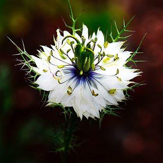 Interessant, was aus einer Blumenmischung schönes wächst ❤❤❤ #garten #garden #instagood #insta #instagram #blumen #bloom #westerwald #nature #naturephotography #unbekannt #flowers #macro #macrophotography #nahaufnahme
