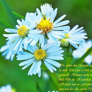 🌈 #engel #traurig #himmel #heaven #mama #mother #angel #dankefüralles #dankbar #danke #thankful
